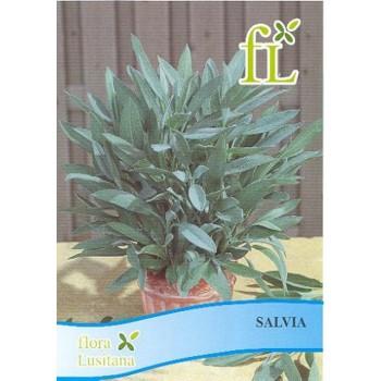 Salvia (aromática)