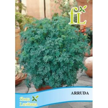 Arruda (aromática)